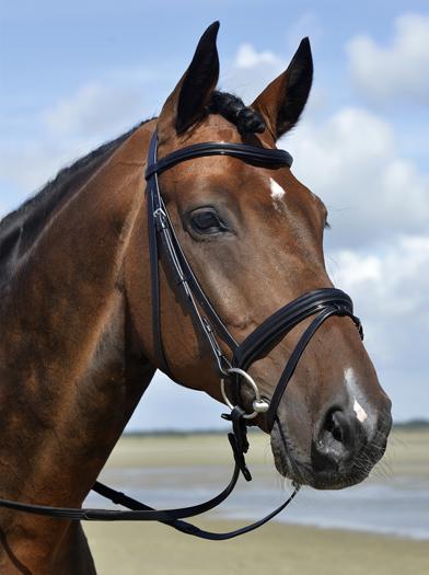 DISCOUNT HORSE TACK